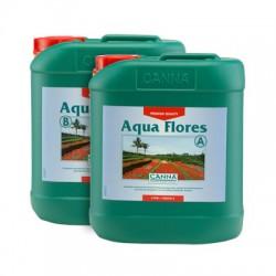 Canna_Aqua_Flores_nagy