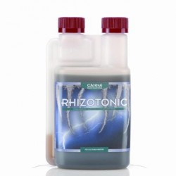 canna-rhizo-500